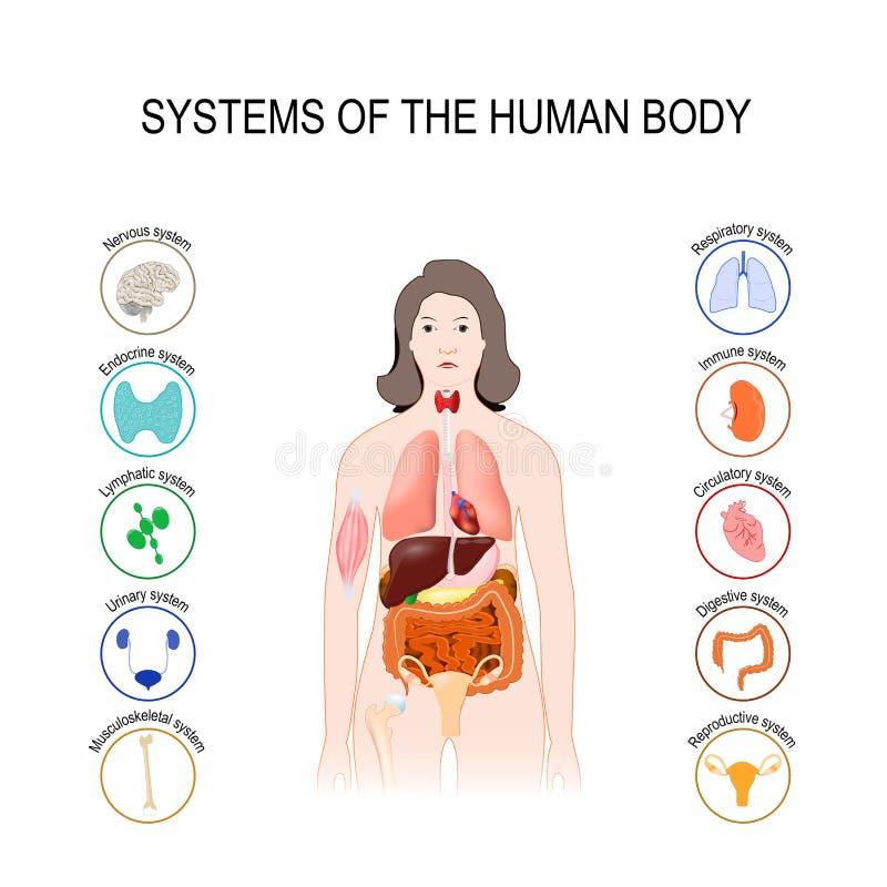 System av människokroppen stock illustrationer