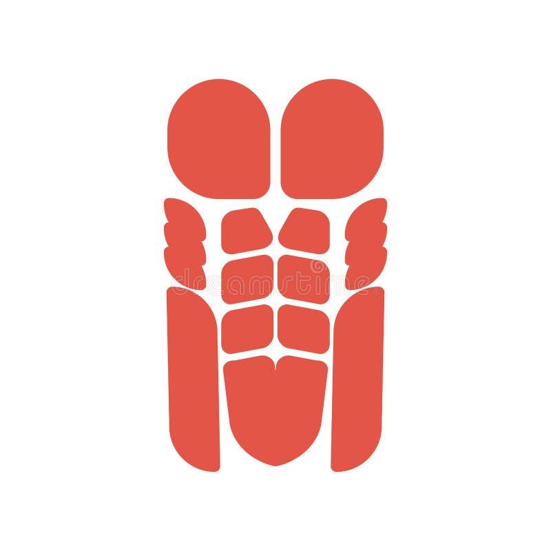 System för människokropp för torsomuskelsystem för corpusman för bröst- muskel och pressmuskulös anatomi vektor illustrationer