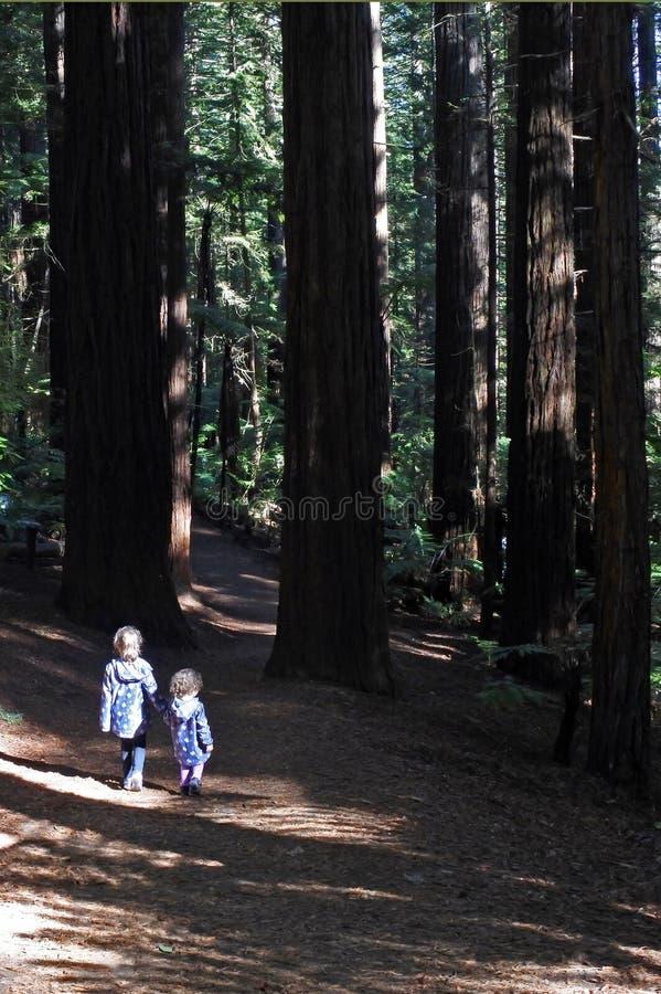 Systrar reser och vandringar i jätte- nyazeeländska redwoodträdskogar arkivbilder