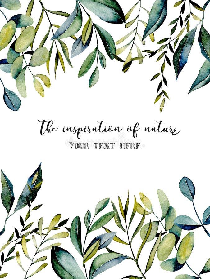 Szablon pocztówka z eukaliptus gałąź i inną zielonych rośliien akwareli ilustracją ilustracji