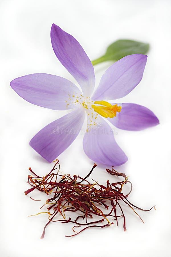 Szafranowa pikantność i kwiat zdjęcia stock