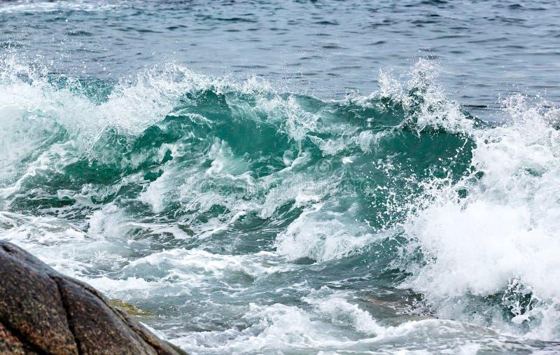 Szaleje fala na wybrzeżu Arktyczny Barents morze, zdjęcia royalty free