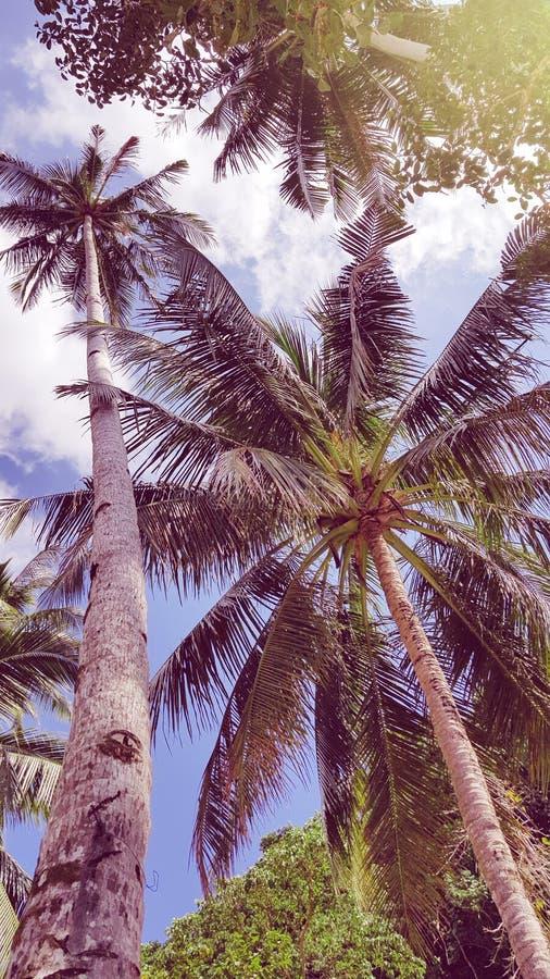 Szaleni lato klimaty w Filipiny obraz stock