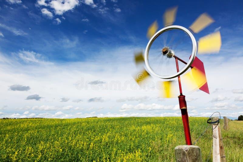 Szalenie wirować wiatrowskaz wzdłuż canola pola zdjęcia royalty free