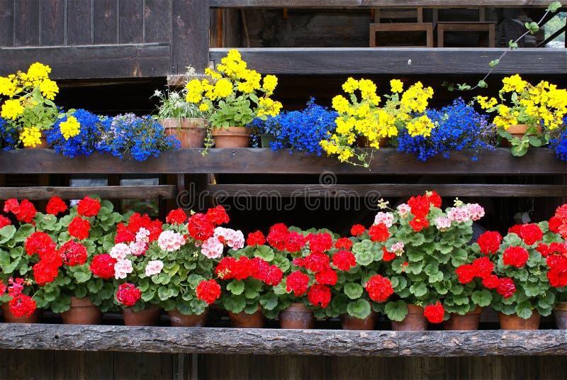 szaletów kwiaty obraz stock
