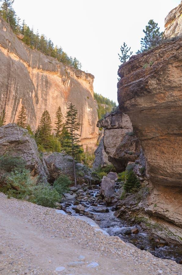 Szalony kobieta jar - Wyoming zdjęcie royalty free
