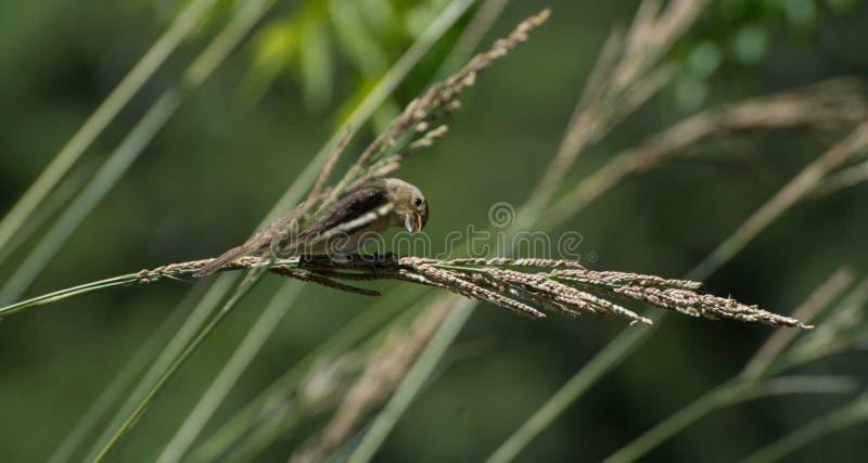 Szalony ptak obrazy stock