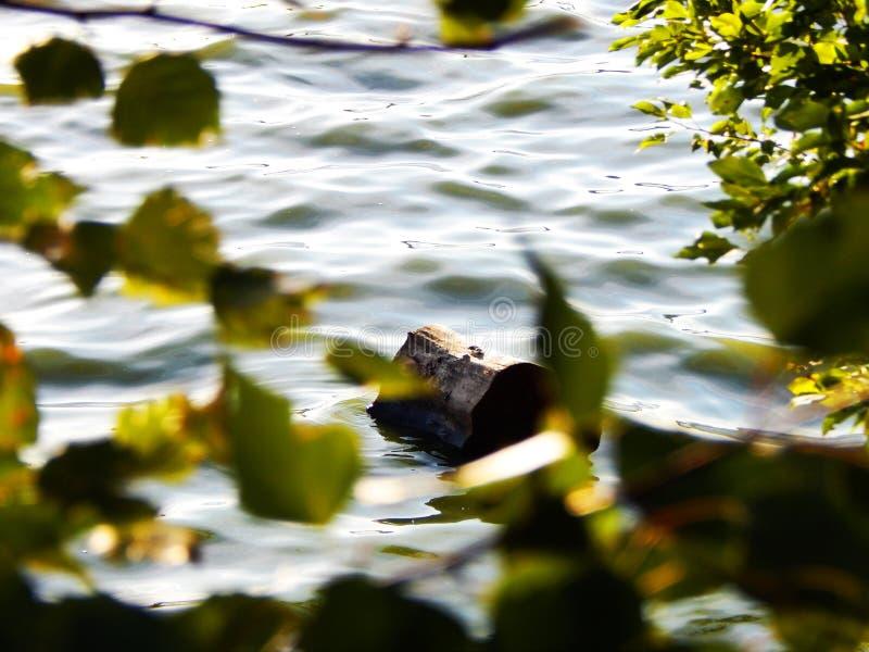 Szalunek na wodzie niebo słońce Jezioro fotografia stock