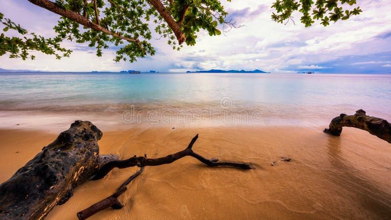 Szalunki na plaży z gałąź, Długi ujawnienie zdjęcie royalty free