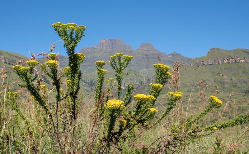 Szampana kasztel, Cathkin szczyt i michaelity Cowl: szczyty blisko Winterton tworzy część środkowy Drakensberg, Południowa Afryka zdjęcie stock