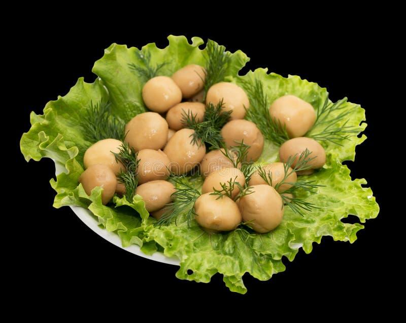 Szampinion ono rozrasta się w sałata liściach na czarnym tle zdjęcie royalty free