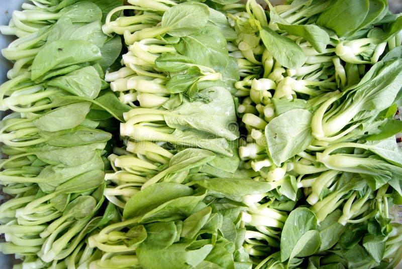 Szanghaj zieleni warzywa zdjęcia stock