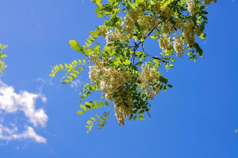 Szarańcza kwiaty zdjęcia royalty free