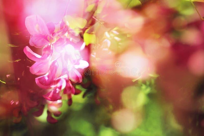 Szarańcza kwiaty bogaci kolory błyszczą w świetle słonecznym zdjęcia stock