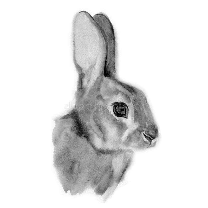 Szara śliczna zając Akwarela obrazu królik royalty ilustracja