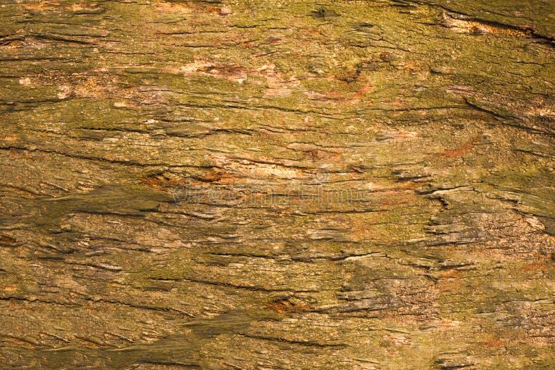 Szara żółtej zieleni stara drzewna barkentyna z pęknięciami zamyka w górę naturalna nawierzchniowa tekstura zdjęcie royalty free