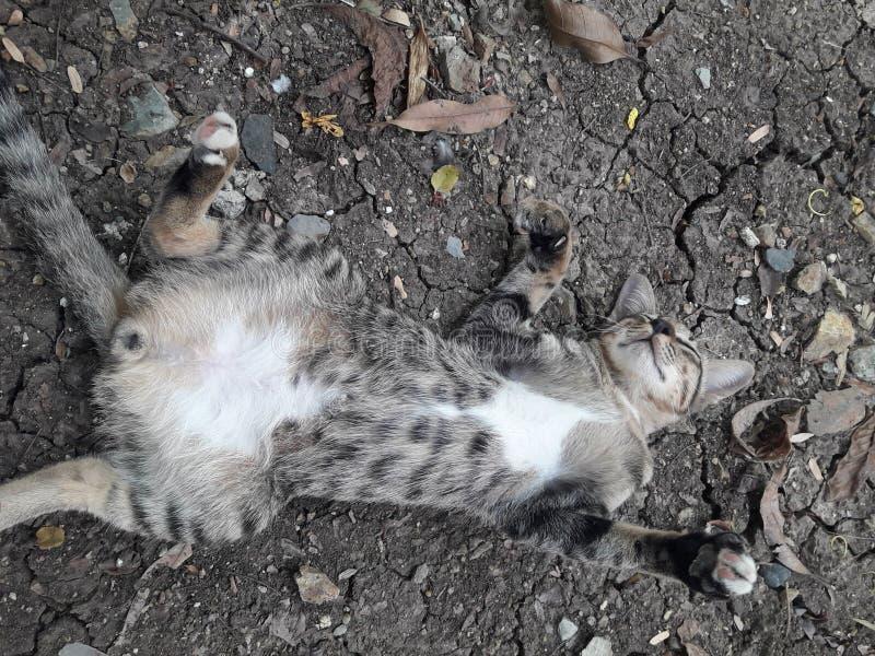 Szarość pasiaści koty na ziemi obrazy stock