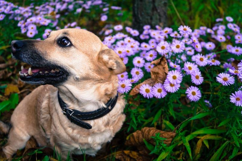 Szarość są prześladowanym na spacerze w jesień parku wśród kwiatów zdjęcia stock