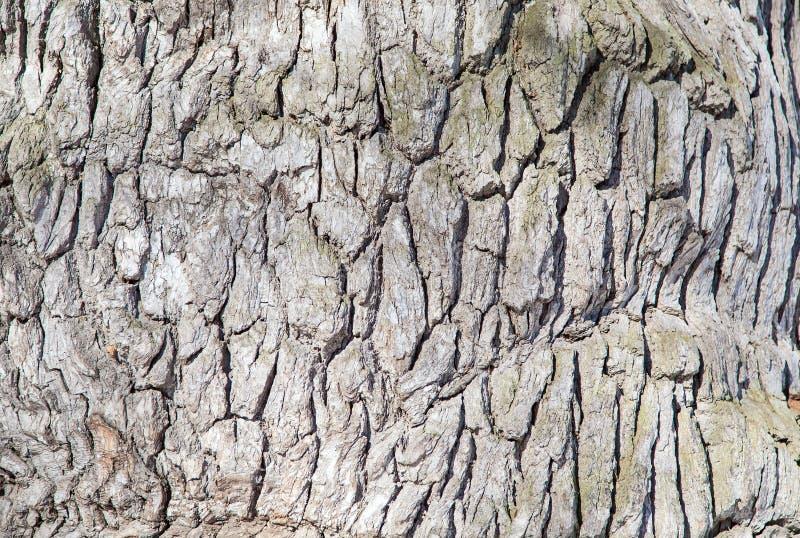 Szarości barkentyna drzewo obraz stock