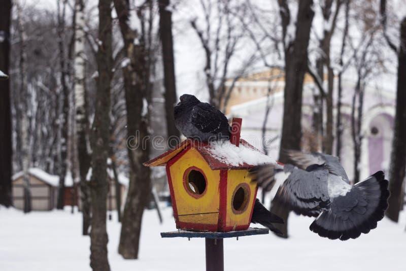 Szarości gołąbka siedzi na dozownik zakrywającym śniegu w zima lesie, tło obrazy royalty free