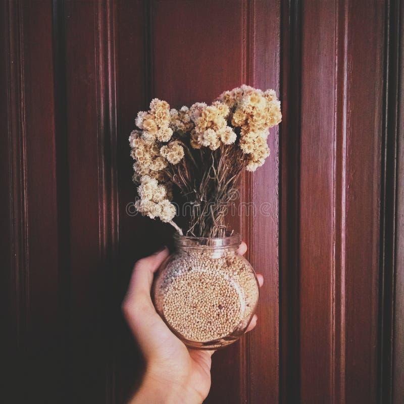 Szarotka kwiat zdjęcia stock