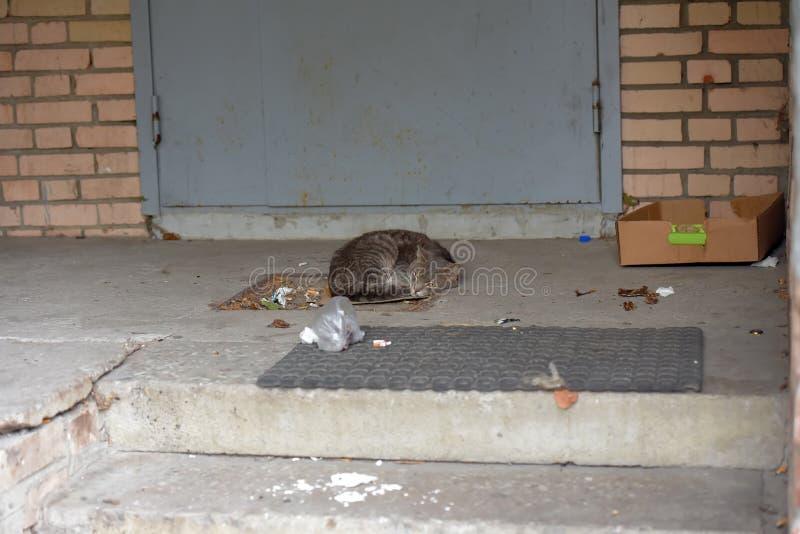 Szary bezdomny nieszczęśliwy kota dosypianie obrazy stock