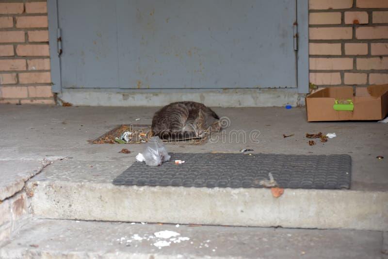 Szary bezdomny nieszczęśliwy kota dosypianie zdjęcie stock