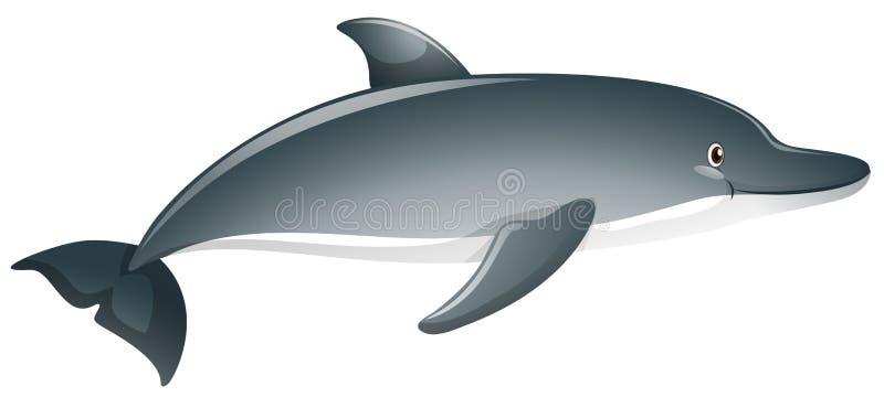 Szary delfin na białym tle ilustracji