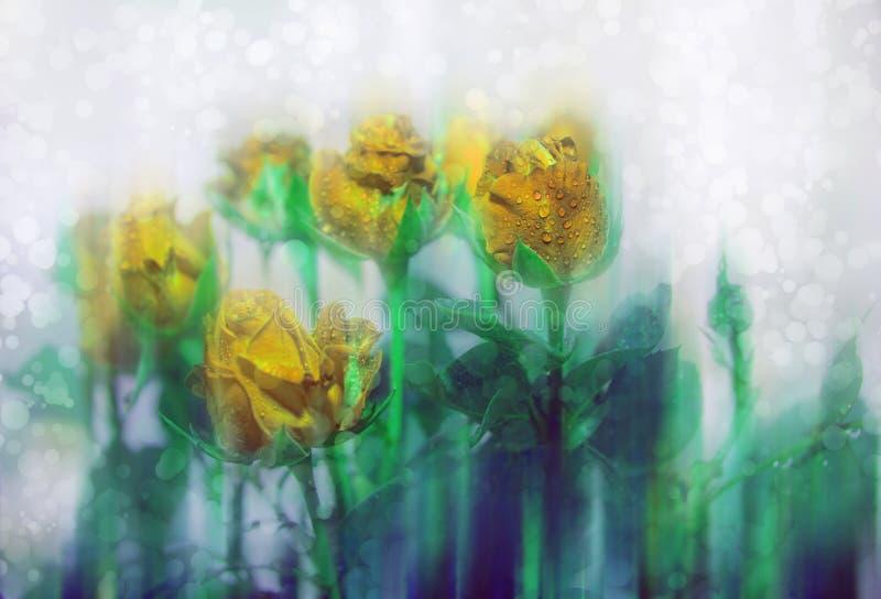 Szary dzień chmurzy złote róże przy nadokiennymi kroplami woda Lekki t?o obraz royalty free