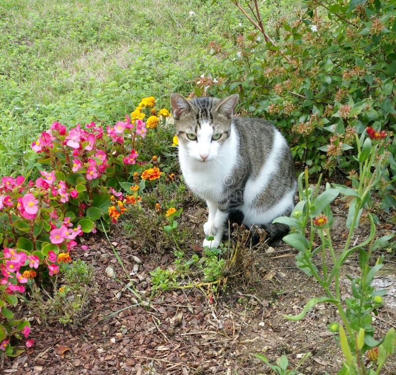 Szary i biały kot wśród kwiatów obrazy royalty free