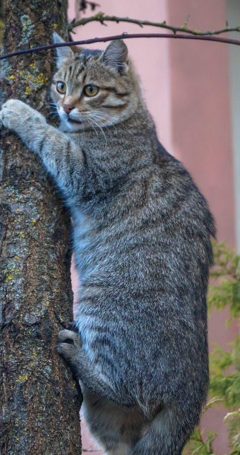 szary kota obsiadanie na drzewie obrazy stock