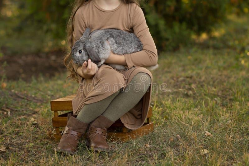 Szary królik siedzi na dziewczynie w jej rękach, siedzi na haliźnie z zieloną trawą na drewnianym pudełku Brown włosy i brąz sukn obrazy royalty free