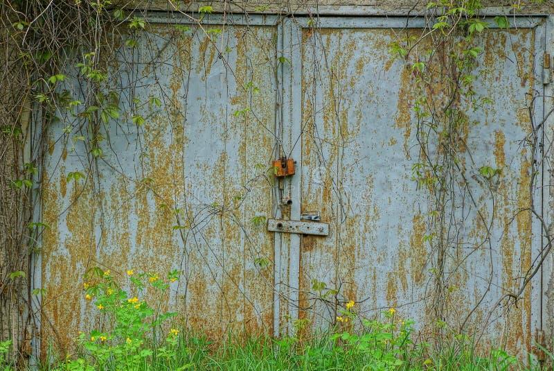 Szary ośniedziały garażu drzwi robić metal przerastający z roślinnością i zieloną trawą fotografia stock