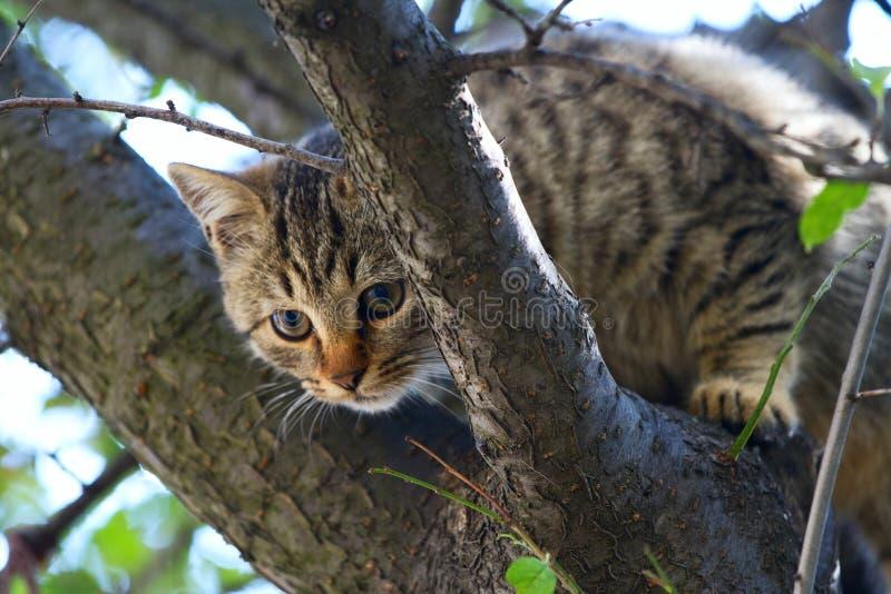 Szary puszysty kot siedzi na drzewie fotografia stock