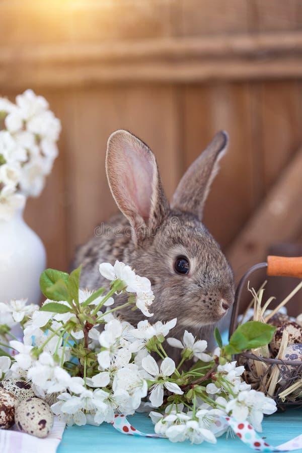 Szczęśliwy Easter obrazy royalty free