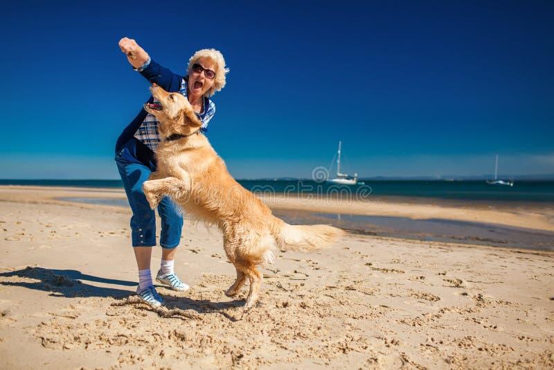 Szczęśliwa kobieta bawić się na plaży z golden retriever zdjęcia royalty free
