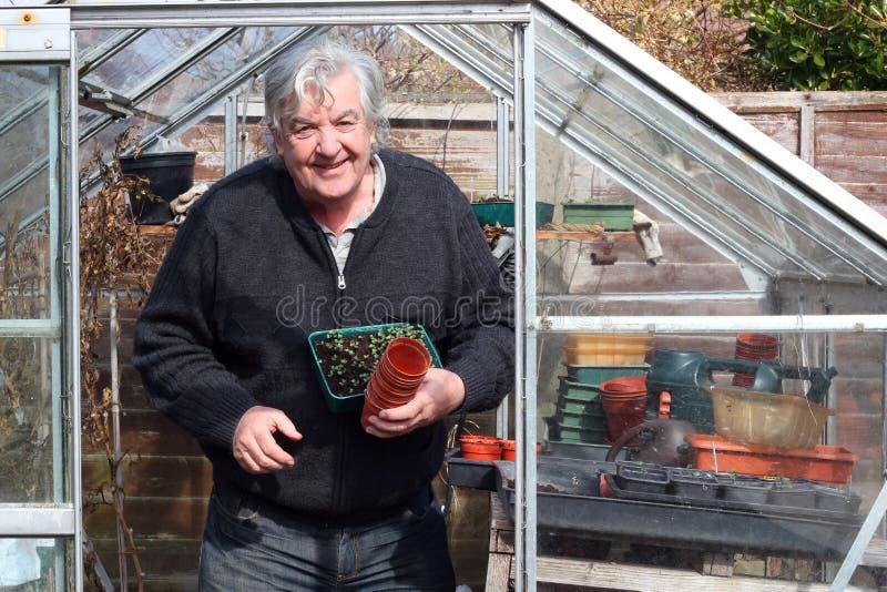 Szczęśliwa ogrodniczka w jego szklarni. obraz stock