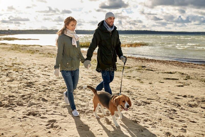 Szczęśliwa para z beagle psem na jesieni plaży obrazy stock