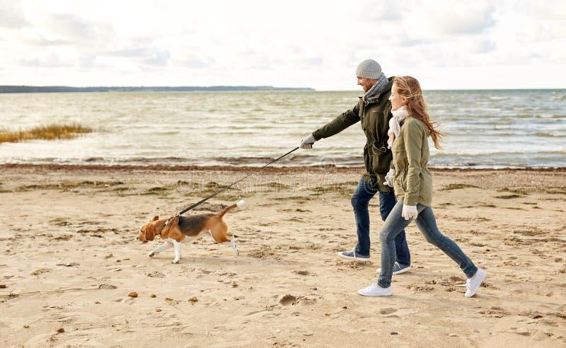 Szczęśliwa para z beagle psem na jesieni plaży obraz stock