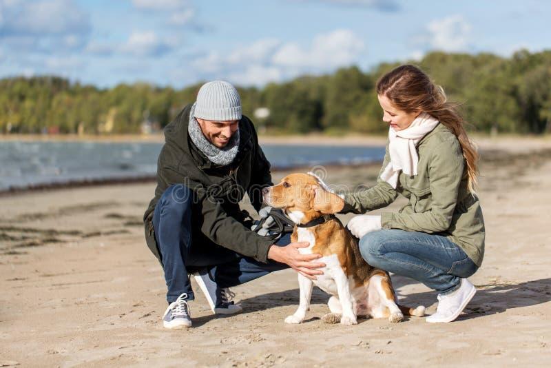 Szczęśliwa para z beagle psem na jesieni plaży zdjęcie stock