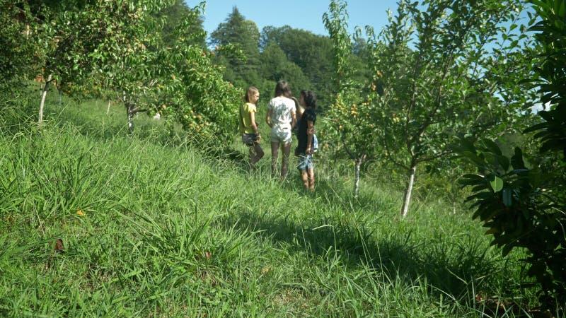 Szczęśliwa rodzina z trzy dziećmi chodzi przez brzoskwinia sadu fotografia royalty free