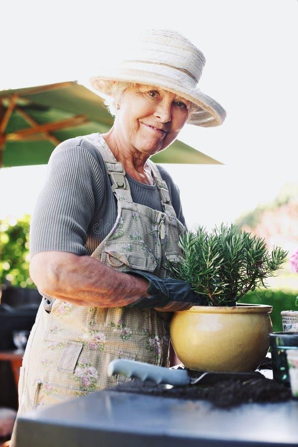 Szczęśliwa starsza żeńska ogrodniczka puszkuje nowej rośliny zdjęcie royalty free