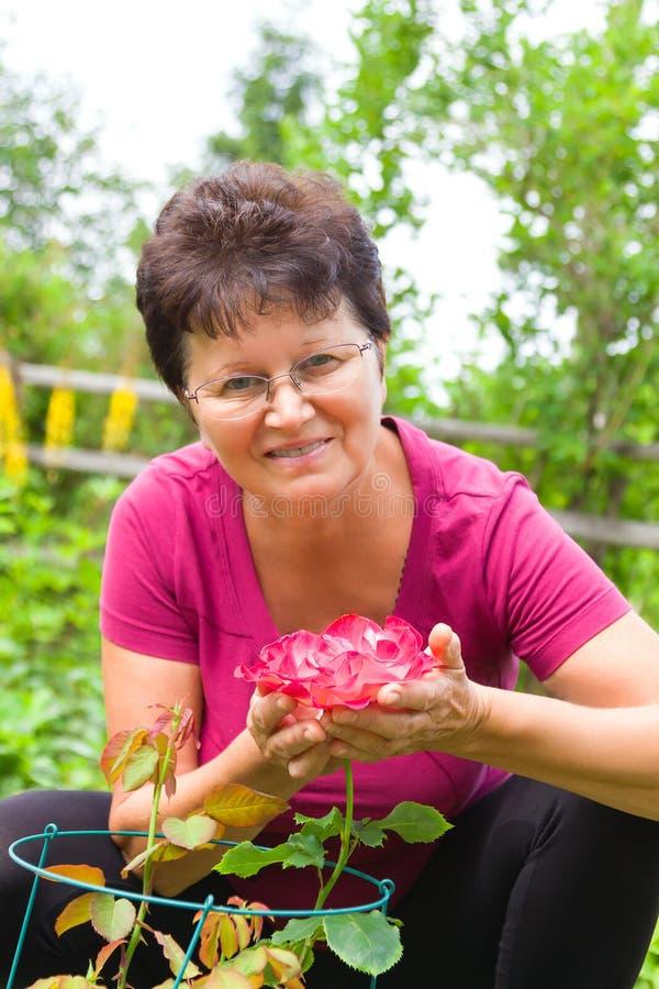Szczęśliwa starsza kobieta trzyma pięknej menchii róży siedzi w kwitnącym lato ogródzie w ona ręki obrazy royalty free
