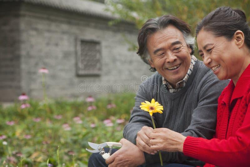 Szczęśliwa Starsza para z kwiatem fotografia stock