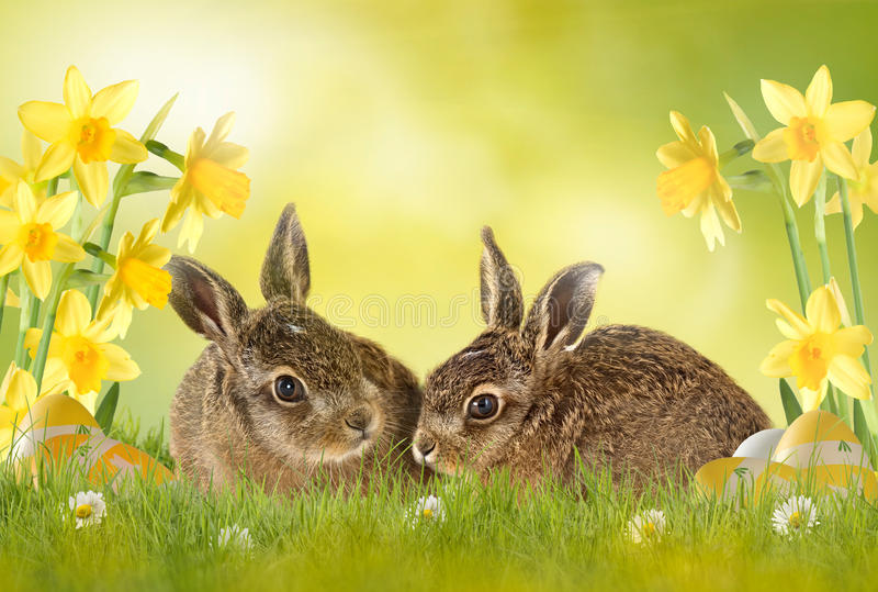 Szczęśliwa wielkanoc; easter królik fotografia stock