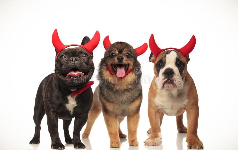 3 szczęśliwego ślicznego psa świętuje Halloween fotografia royalty free