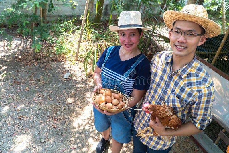 Szczęśliwego azjatykciego rolnik odzieży szkockiej kraty długiego rękawa brązu koszulowy fartuch trzyma świeżych kurczaków jajka  obraz royalty free