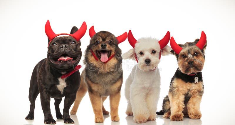 4 szczęśliwego małego psa świętuje Halloween zdjęcia stock