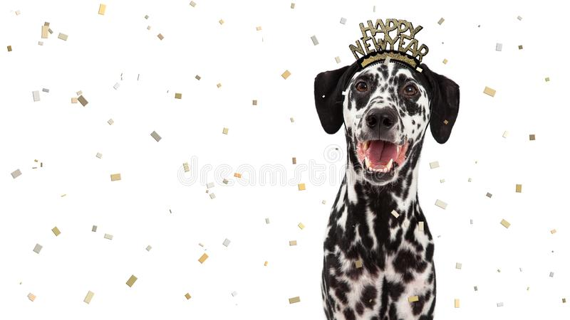 Szczęśliwego nowego roku świętowania Dalmatyński pies obrazy stock