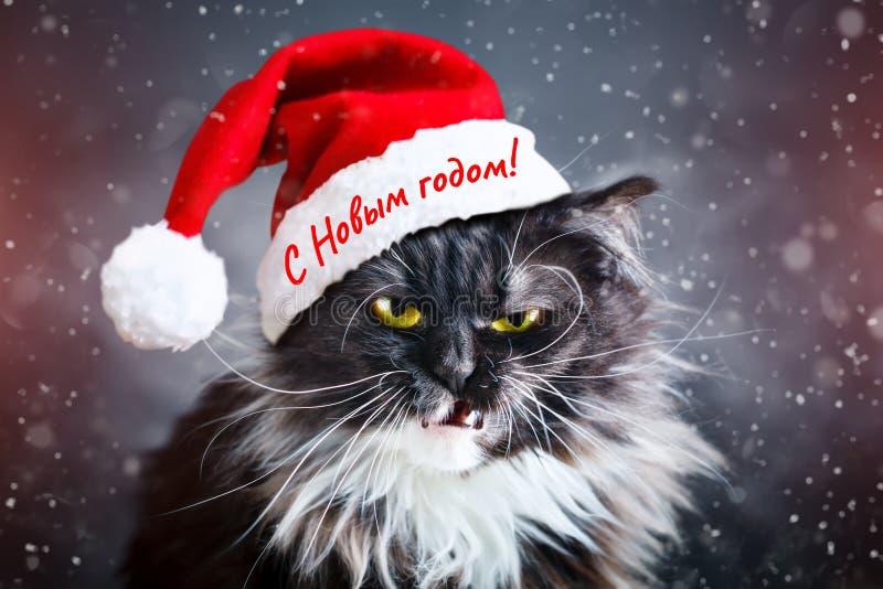 szczęśliwego nowego roku, Nowego Roku ` s kot w Bożenarodzeniowym kapeluszu nowy obraz stock
